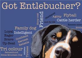 Got Entlebucher? Woof Cloud Blue