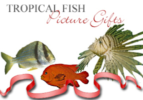 <b>TROPICAL FISH PICTURE GIFTS</b>