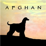 Afghan Hound Orange Sunset