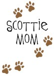 Scottish Terrier - Scottie