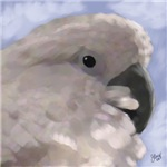 Umbrella Cockatoo Digital Oil