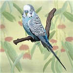 Blue Parakeet or Budgie