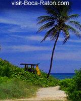 Boca Raton Palm Tree