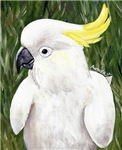 BIRDS - Sulphur Crested Cockatoo 2