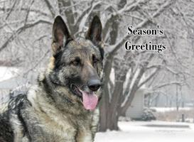 German Shepherd Season's Greetings