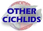 Other Cichlids