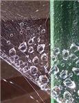 Raindrops on a Web