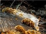 Fungi on the Grain