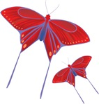 Butterfly Gifts!