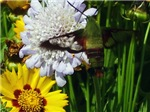 Butterfly & Other Winged Creatures Photography