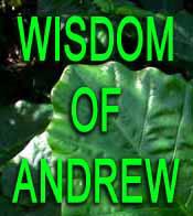 The Wisdom of Andrew