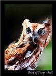 Bird of Prey - Owl