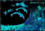 dolphins moonlight bay