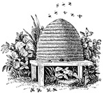 3rd Degree - Beehive