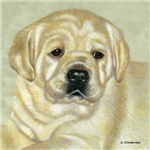 Nick, Yellow Lab Puppy