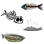 1640 Fish Skeletons