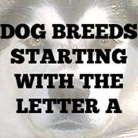Dog Breed T-Shirts A