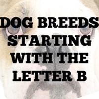 Dog Breed T-Shirts B