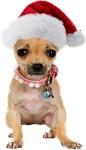Santa Chihuahua