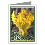 ...Narcissus 02...
