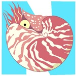 N is for Nautilus T-shirts & Gifts