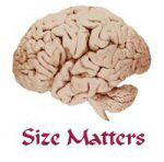 """""""Size Matters"""" is in Brainiacs"""