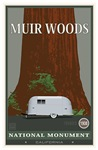 Muir Woods NP