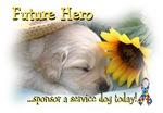 Future Hero Yellow Lab pup!