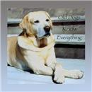 Old Yellow Labrador Retriever