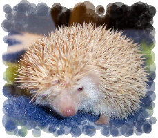 Winky the Hedgehog