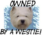 Owned by a Westie