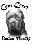 Cane Corso Head