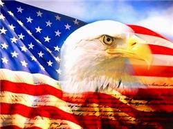 New American Bald Eagle Design