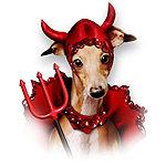Italian Greyhound Devil Dog Shop
