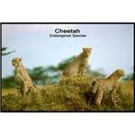 Cheetah Wildcat Photo