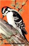 Downy Woodpecker Bird