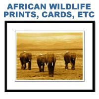 Elephant & Wildlife Prints & Posters