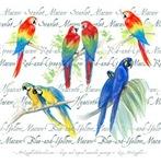 Love those Macaws!