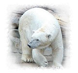 Polar Bear Gift Ideas