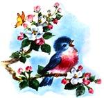 Cute Bluebird Singing