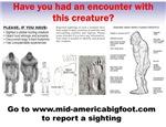 Sighting Report Items