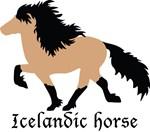Buckskin Icelandic horse