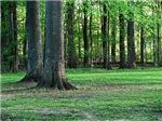 Ideal Park