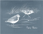 Piping Plover Note Cards