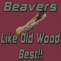 Beavers Like Old Wood Best!!