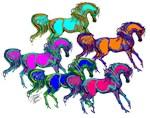 Arab Horse Gems