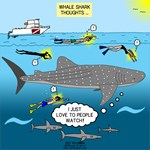 Whale Shark Thoughts