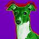 Italian Greyhound: Luna