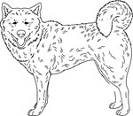 Siberian Husky Line Drawing