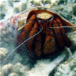 Hermit Crab Gifts